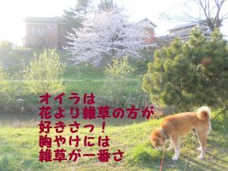 ・費シ呻シ胆convert_20090409232724