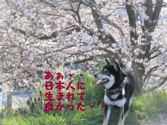 ・費シ呻シ・90409+036_convert_20090409232636