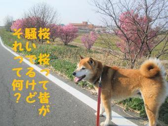 ・費シ托シ・90412+022_convert_20090415224327