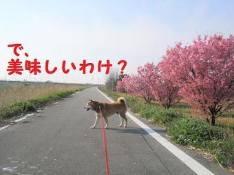 ・費シ托シ費シ狙convert_20090415224353