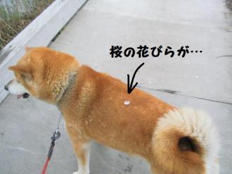 ・費シ托シ包シ農convert_20090416170659