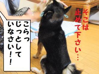 ・費シ托シ托シ・90411+043_convert_20090420001556