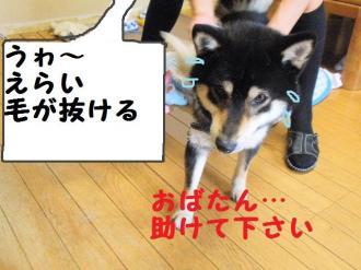 ・費シ托シ托シ狙convert_20090420001623