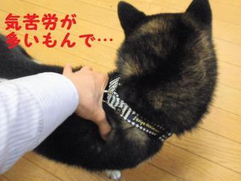 ・費シ抵シ撰シ神convert_20090426231813