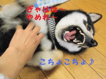 ・費シ抵シ撰シ狙convert_20090426231904