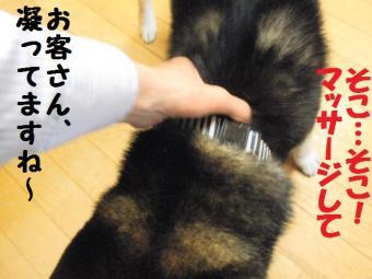 ・費シ抵シ撰シ胆convert_20090426231745