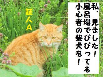 ・費シ包シ・90415+006_convert_20090505215655