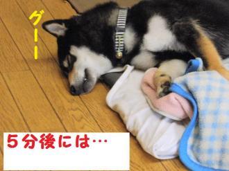 ・包シ包シ狙convert_20090506233403