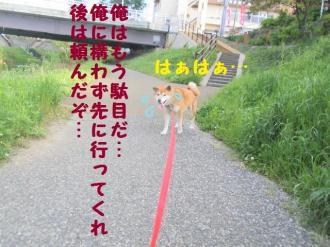 ・包シ兩convert_20090509203338