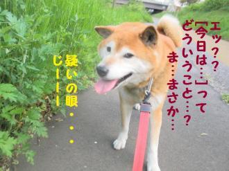・包シ呻シ狙convert_20090509203222