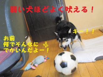 ・撰シ包シ托シ廟convert_20090517223505