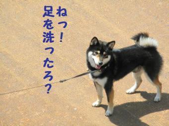 ・撰シ包シ抵シ胆convert_20090522195744