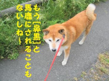 ・撰シ包シ抵シ誉convert_20090527220620