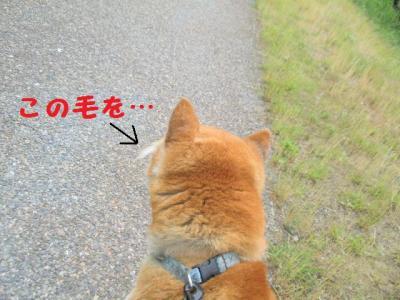 ・厄シ托シ托シ神convert_20090613174233