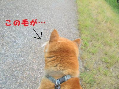 ・厄シ托シ狙convert_20090613174210