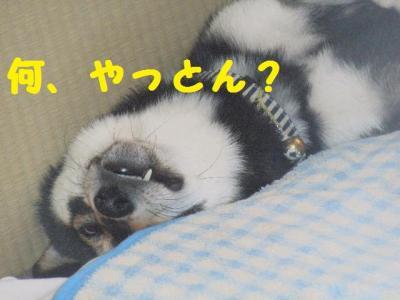 ・厄シ托シ費シ狙convert_20090615154315