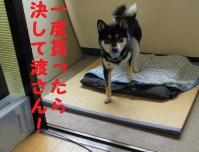 ・撰シ撰シ神convert_20090622175443