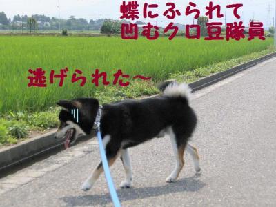 縺オ繧峨l繧祇convert_20090712233609