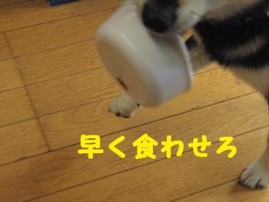 ・暦シ托シ費シ狙convert_20090714235729