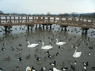 瓢湖2010