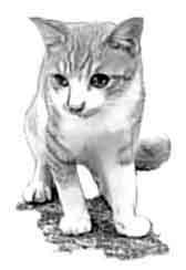 cat_tora_film38_3cm_56px_mono.jpg