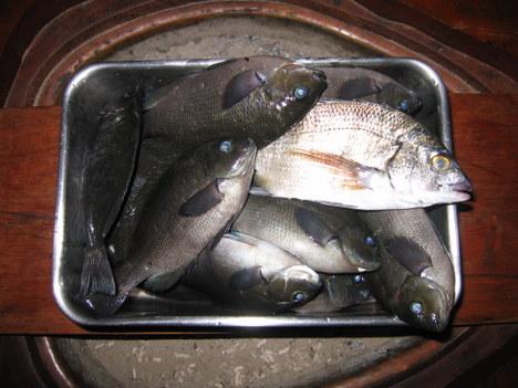 慶子大漁 002