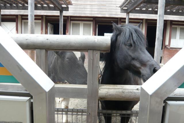 牛が馬に恋してる!?
