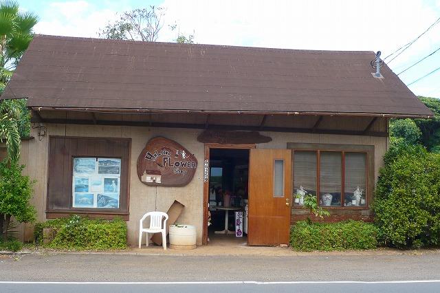 hawaii29_halleiwa4.jpg