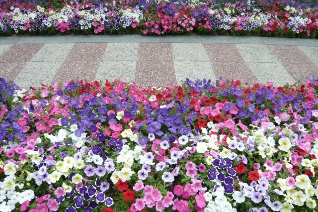 この時期、花が満開ですっ!