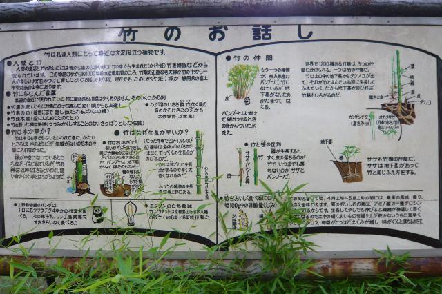 takenoko_kouen02.jpg