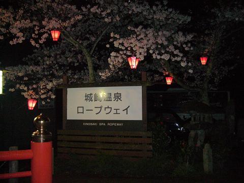 夜桜・城崎