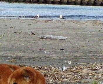 柳と海ネコ