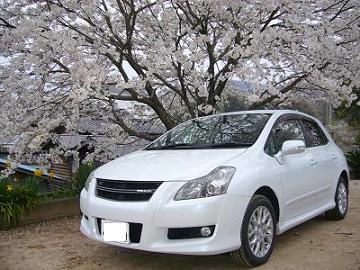 桜とパシャ!