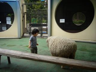 羊にもあいさつ。