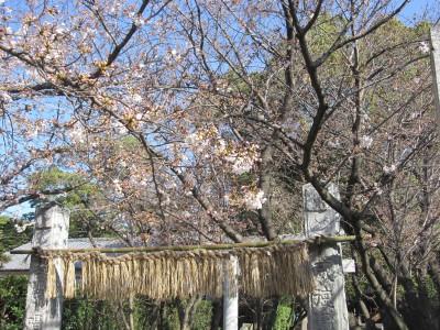 春が来た (4)