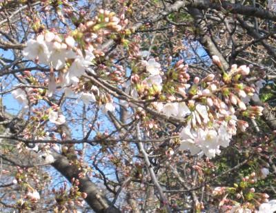 春が来た (5)