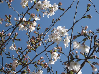 春が来た (9)