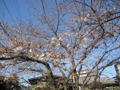 春が来た (33)