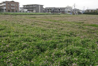 20100404れんげ畑