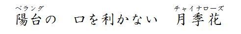 haiku-004.jpg