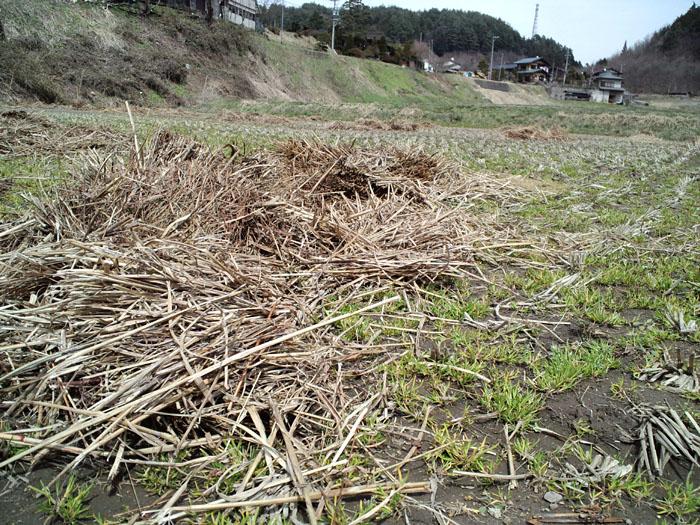 春 農作業 米作り 日之本元極