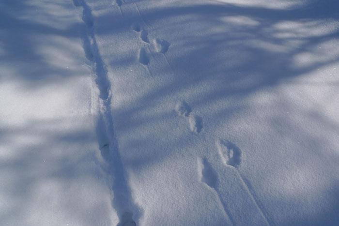 あしあと 足跡 冬 農道 ひだ 高山