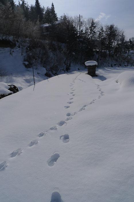 足跡  厳冬期  飛騨の風景