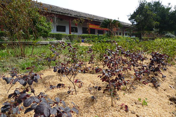 薬草 庭園 博物館 中国