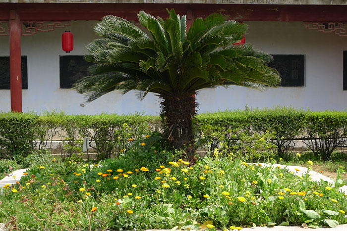 薬草 庭園 博物館 中国 李時珍