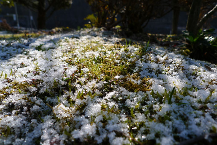 斐太の春 雪 ゆき 日之本元極 飛騨 高山