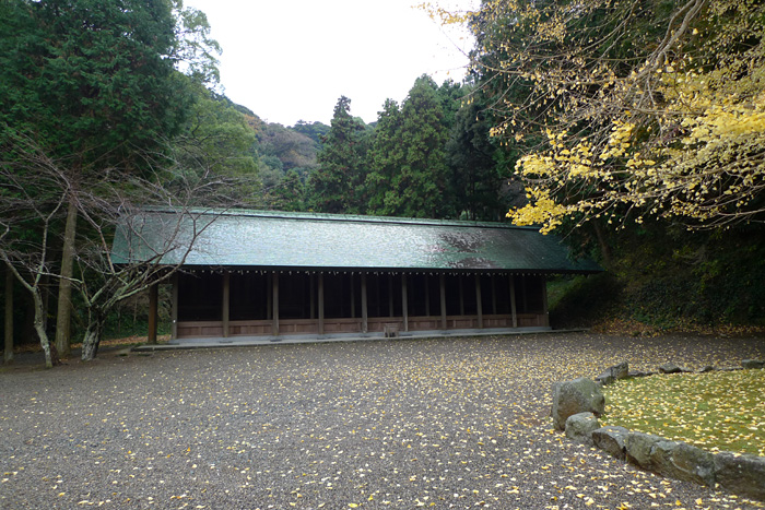 千葉県 安房神社 杉