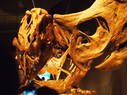 恐竜博 恐竜