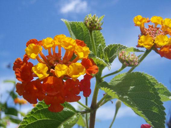 2007宮古島、花