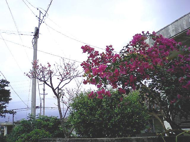 CA331380.jpg